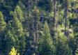 Investir dans une forêt