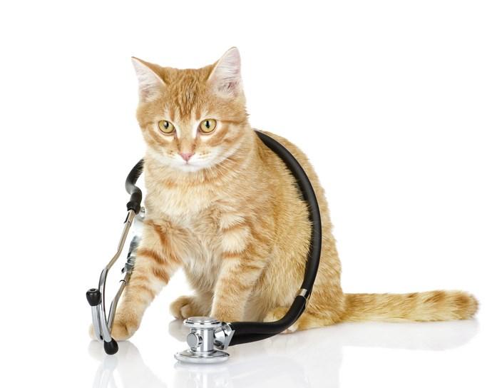frais veterinaire