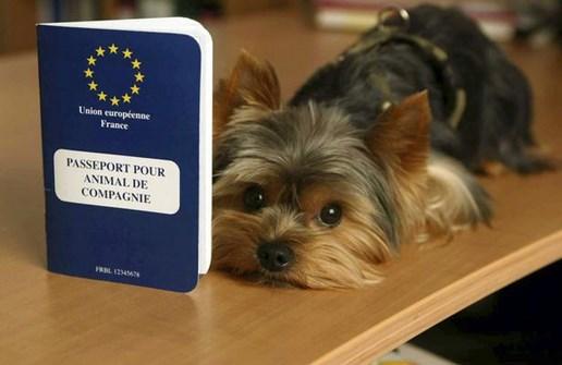 passeport_animal