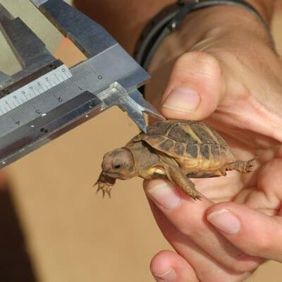 assurance-tortue-serpent