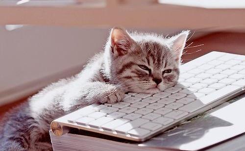 Chaton endormi sur un clavier